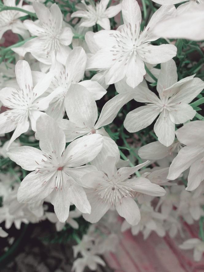 flowerpot-whiteout